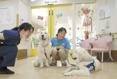 【日本で2頭】ご存じですか?人々の心を穏やかにする犬「ファシリティドッグ」(まとめ)