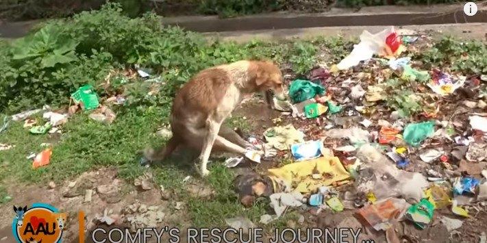 背骨損傷で後足が動かない犬を救助。根気強いケアで見違える姿に!