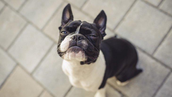 犬が口を閉じているときの心理状態とは?