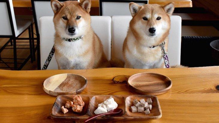 犬がのどに詰まらせやすい食べ物6選