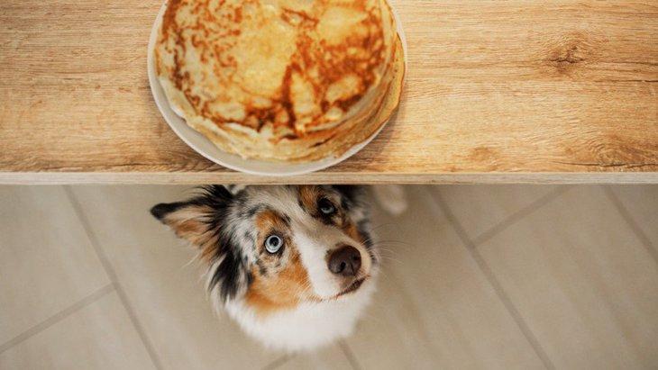 犬がテーブルの上に乗ってくる心理3選!やめさせるための方法は?