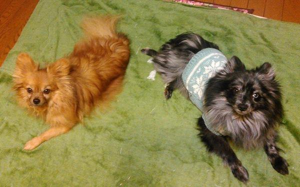 犬の多頭飼いのメリットとデメリットについて