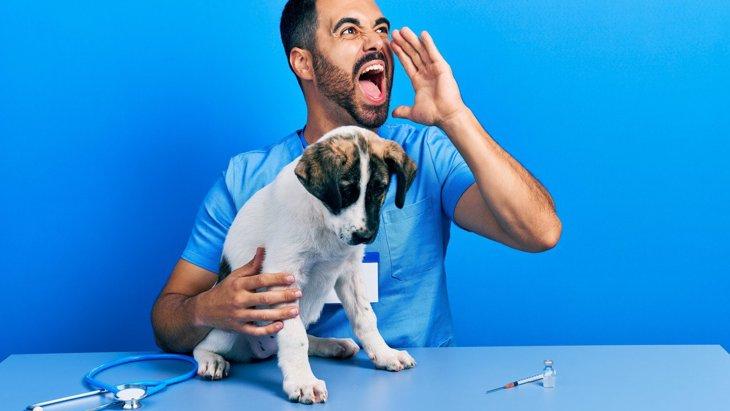 絶対ダメ!犬に『大声』を出すのがNGな4つの理由