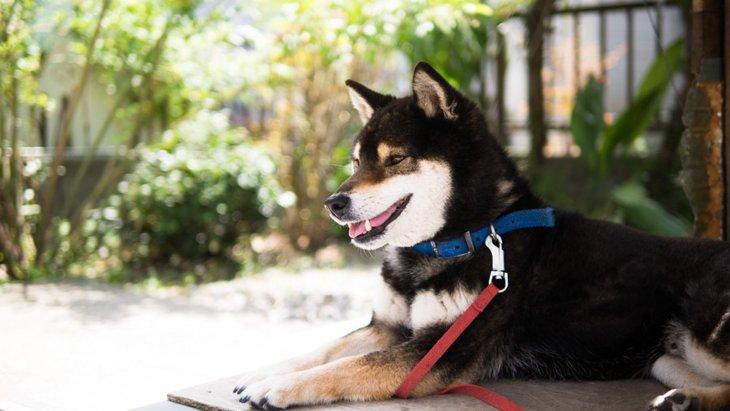 どれくらい知ってる?日本が原産国の現存6犬種