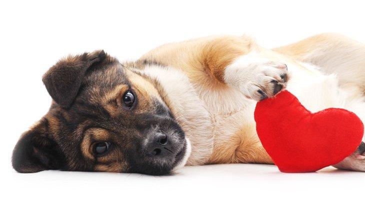 犬の肝臓がんは早期発見が重要!症状から検査方法まで