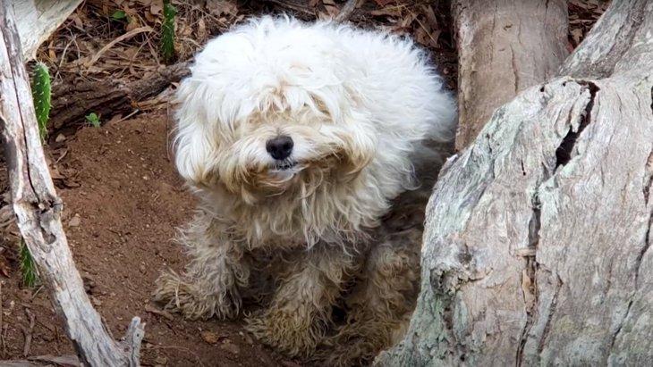 枯木の空洞で暮らしていた孤独な小型犬。怯えを克服して見違えるほど活発に!