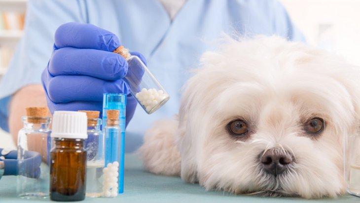 犬の天疱瘡について その原因と症状、治療や予防法