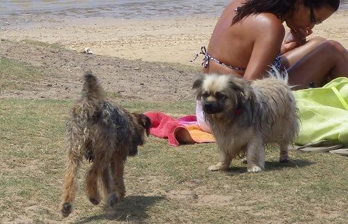 海外の犬のウンチ対策 ~動物愛護国イギリスわんこ事情~