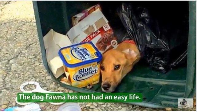 ボーイフレンドと一緒に住むために愛犬をゴミ箱に捨てて引っ越した女性