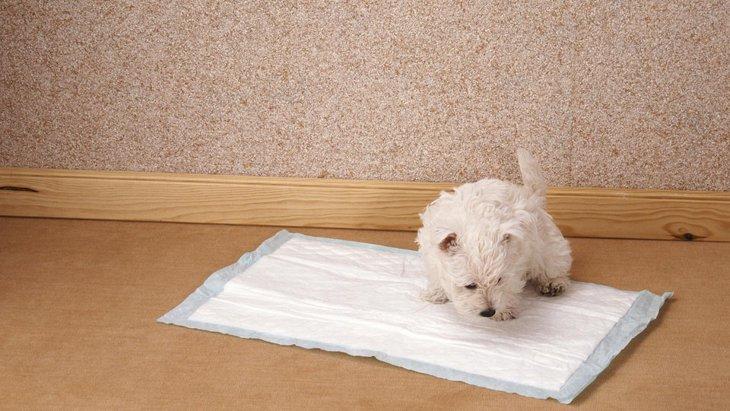 犬のトイレがはみ出しちゃう!飼い主にできる2つの対処法