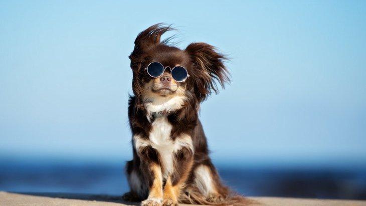 犬の紫外線対策をするメリット3つ