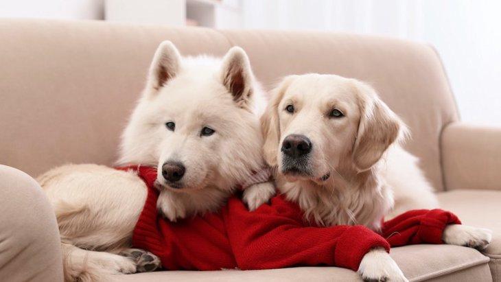 犬が賢いと言われている理由3つ