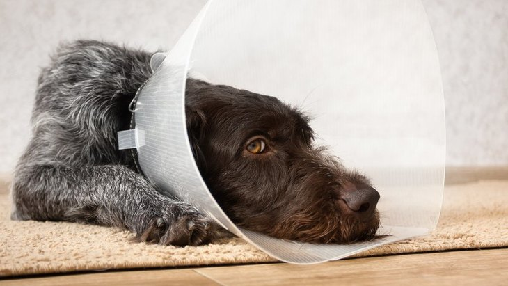 犬の去勢・避妊手術をするかしないか…結局どうすればいいの?