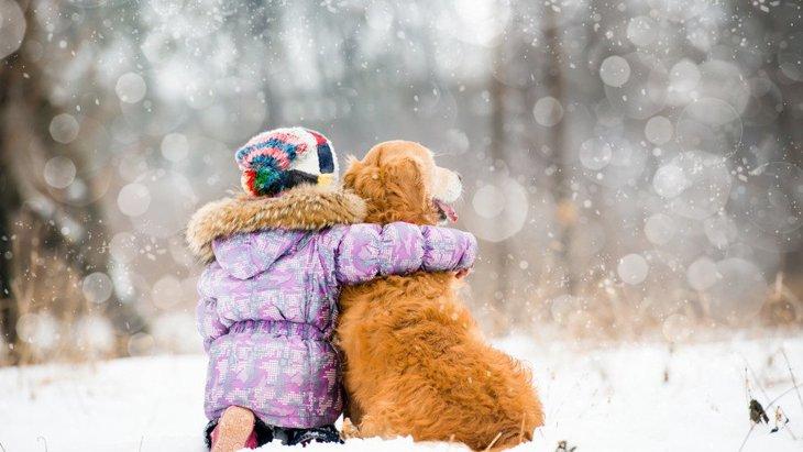犬の防寒グッズのおすすめ5選!ペットのための寒さ対策