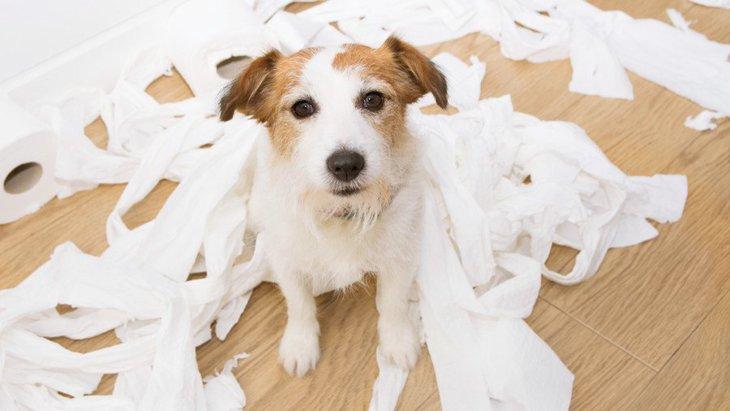 あるある?飼い主を困らせる犬の行動3選と対策