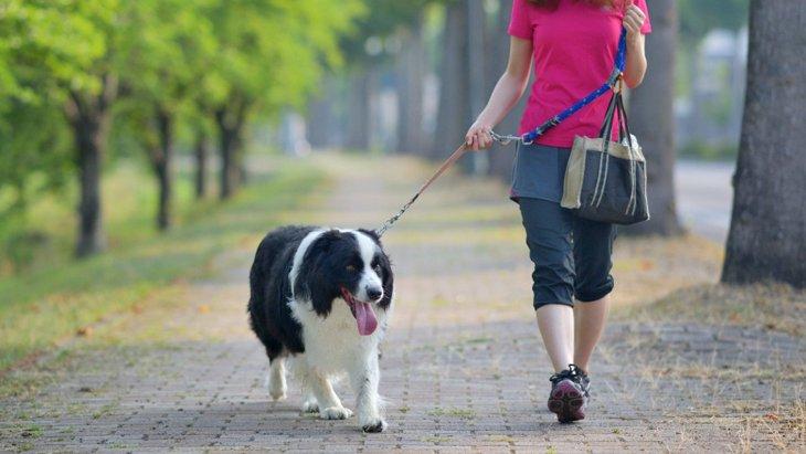犬にとって危険な『毒虫』5選!刺されたときの症状と対処法