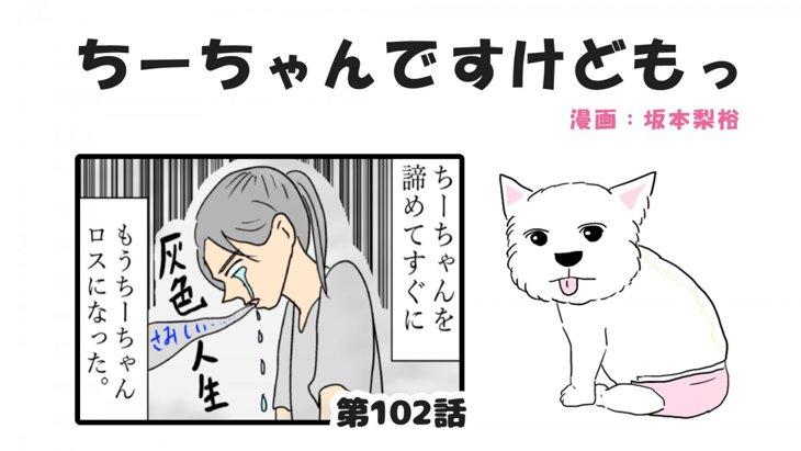 ちーちゃんですけどもっ【第102話】「ちーちゃんとの出会い③」