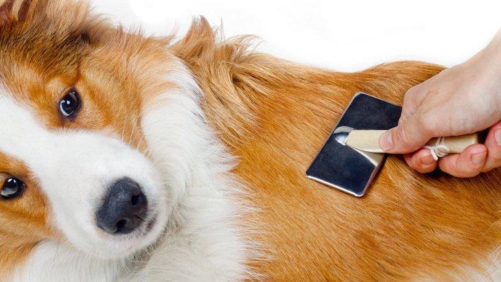 愛犬の体を守る被毛づくりに大切な栄養2つ