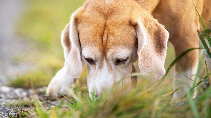 犬が拾い食いしてしまったら『死に至るモノ』5選