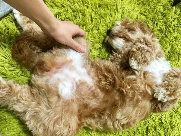 愛犬が喜ぶ4つのスキンシップ!触り方のコツや注意点