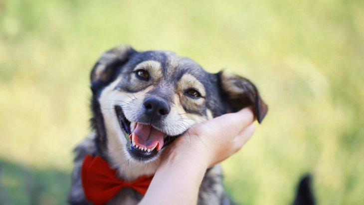 犬にとっての『良い飼い主』の基準とは?