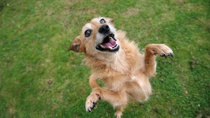シニア犬にトリックを教えることのメリット