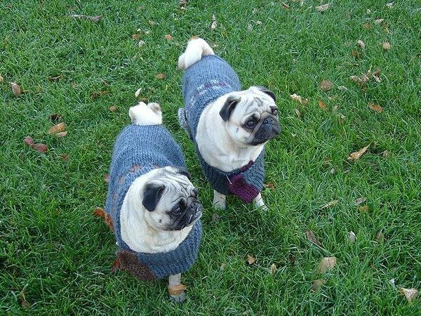 まだ間に合う!愛犬の為の手作りセーター!
