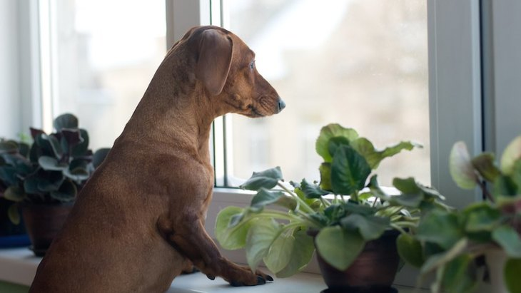 犬の飼い主が罪悪感を感じていることは何?イギリスでのリサーチ結果