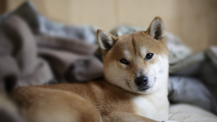 犬が飼い主の布団に入ってくる時の心理5つ