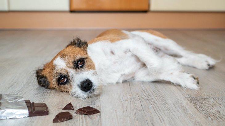 バレンタインに要注意!犬がチョコレートを誤飲するリスクを考えて!