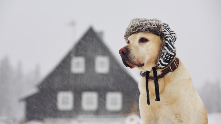 寒い季節の生活習慣が引き起こす!冬に起こりやすい犬の体調不良