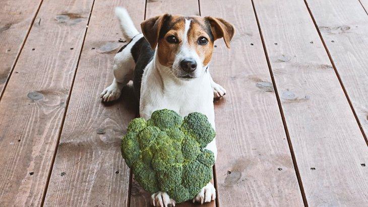 犬が食べられる『野菜』6選!でも与えすぎには要注意!