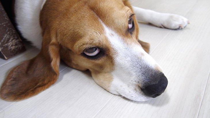 犬が子供にやきもちを焼く原因と解決方法