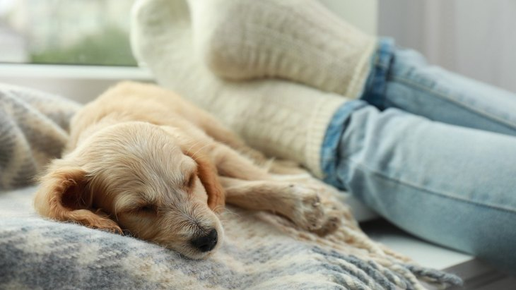 犬を『リラックスさせる』ための方法3選!愛犬が安心できる環境づくりが大切