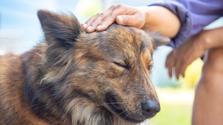 愛犬が他人に撫でられたら、新型コロナウイルスに感染する?