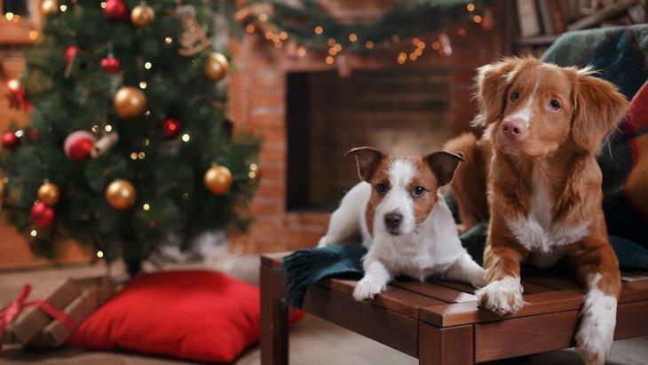 犬とクリスマスを過ごす時に必ず注意しなければいけない5つのこと