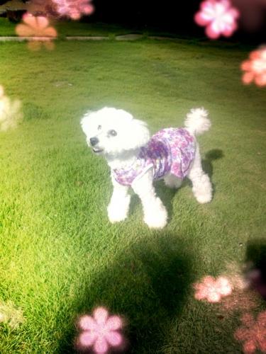 伊豆高原で記念日旅行!犬とリッチに過ごせるホテル「ベル エキップ」