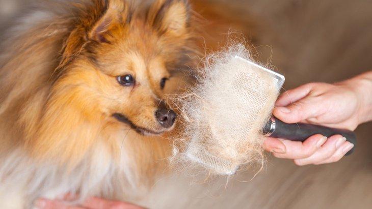 飼い主の過度な温度管理が犬の正しい換毛を妨害する!