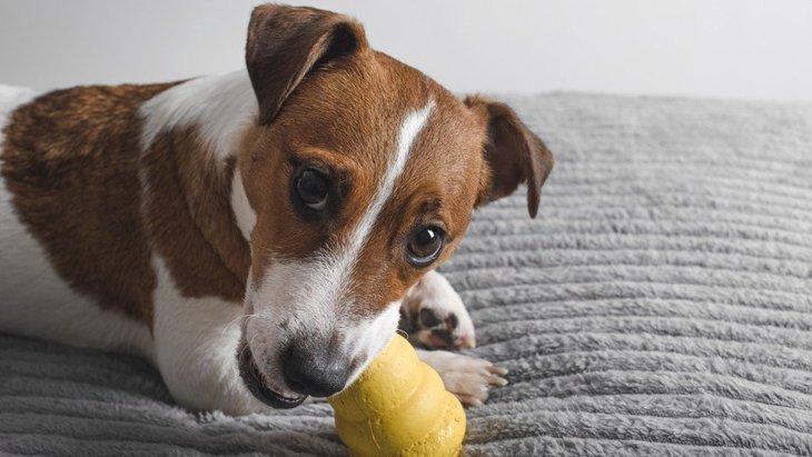 犬の脳を育てる『室内遊び』3選!楽しく遊んで賢くなれるかも?♡