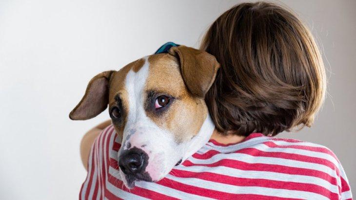 ネガティブな飼い主が愛犬に与える影響3選