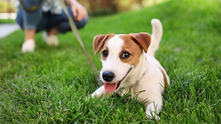 犬が散歩を楽しんでいない時にする仕草や行動3選