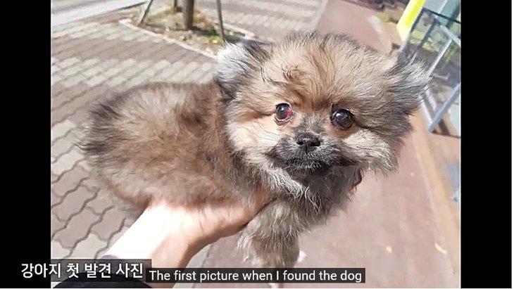捨てられていた仔犬は自力で立つことができませんでした。その原因は…