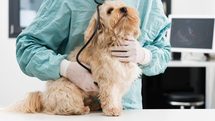 犬の尿毒症 症状や原因、検査から治療法まで
