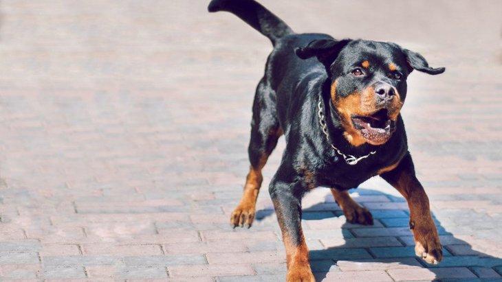 犬が異常に興奮している時の行動や危険性、対処法について