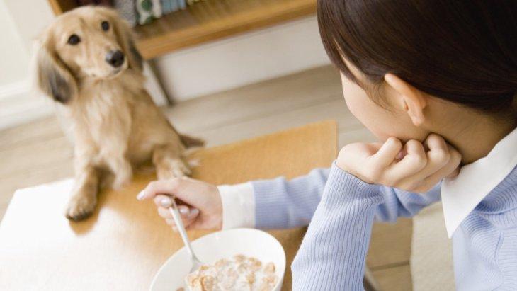 犬の食事の時間は決めたほうがいいの?