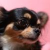 スマホでも上手に愛犬を撮影するポイント4つ