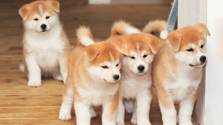 犬種を選ぶ際の基準と考え方