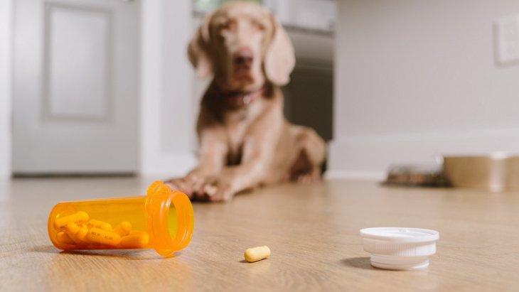 犬が『飲み込んだら死んでしまうモノ』5選!誤飲トラブルを避けるためのコツは?