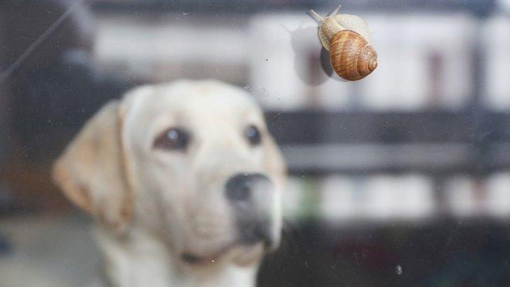 カタツムリが原因で犬が死ぬ?!危険な寄生虫とは