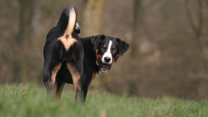 犬が腰を振りながら歩くときに考えられる原因3つ